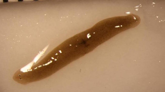 paraziták az emberi testen harapnak parazita állapotok