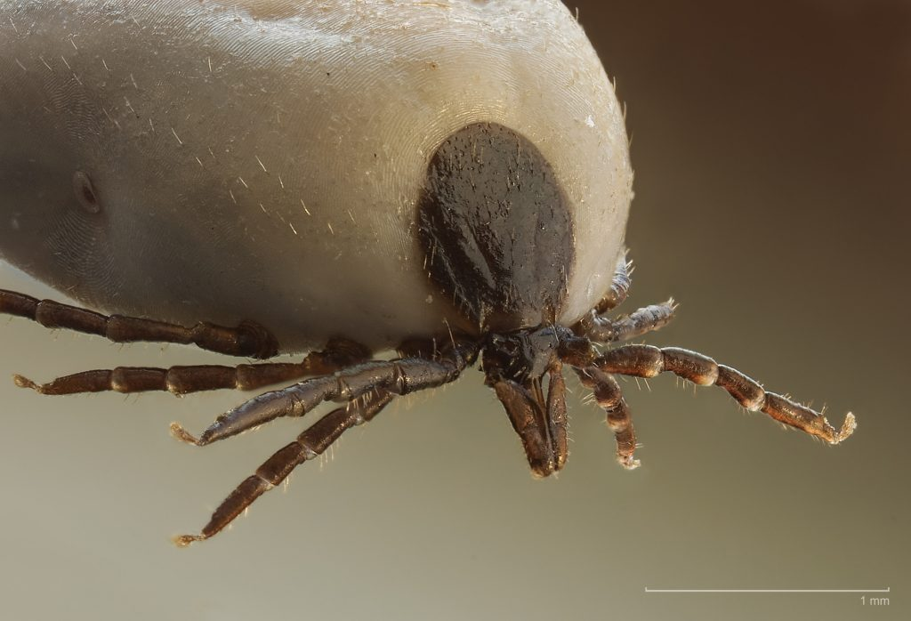 fenevad paraziták a talpi szemölcs cauterizálása után