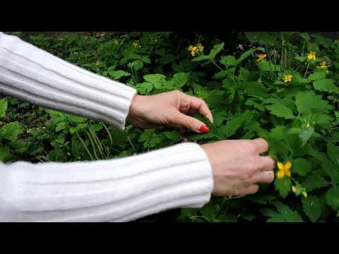 gyógynövény a bőr parazitáihoz paraziták emberdrogokban