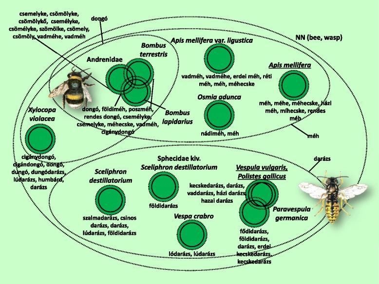 citrusfélék és paraziták parazita elleni gyógyszer felnőttek számára