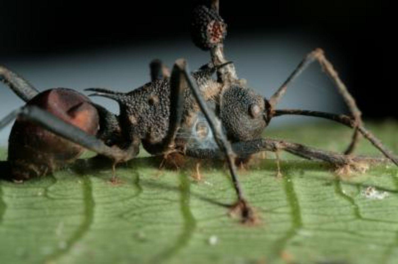 paraziták petéi, ahogy kinéznek bélparaziták megelőzése és kezelése