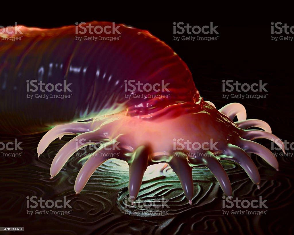 enyhíti a viszketést a pinwormtól a pinwormok kezeletlenül hagyhatók
